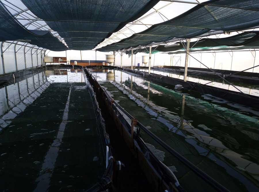 acheter de la spiruline bio label bio spiruline paysanne francaise producteur spiruline vendée bretagne