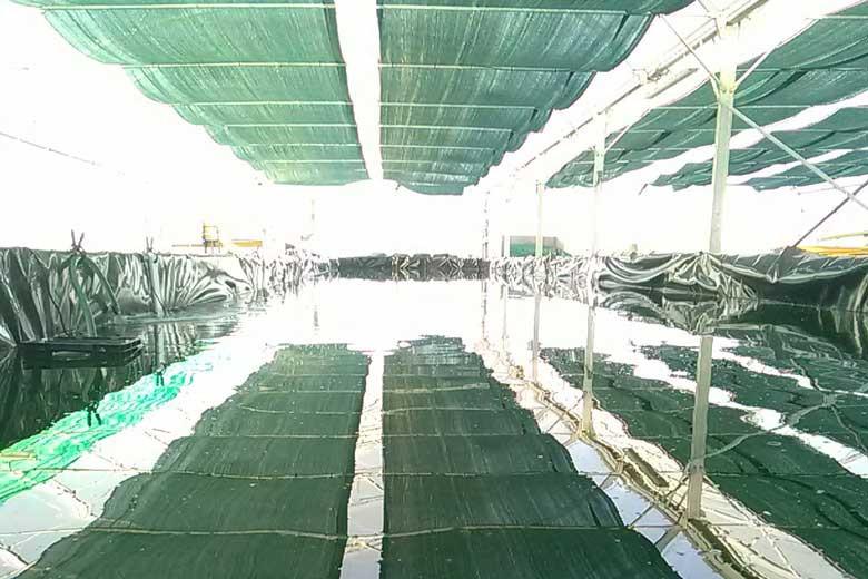 La spirulinerie est une ferme aquacole artisanale située dans le Marais Breton cultive et vente de spiruline en paillettes, produit artisanal français.